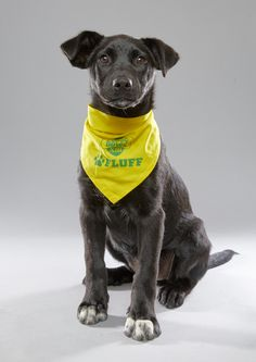 All of the 78 puppies appearing in Animal Planet's Puppy Bowl are shelter dogs
