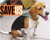 Save innocent beagles from meaningless rabies testing in Taiwan | Please SIGN and share petition. Thanks.
