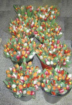 Tulipány Succulents, Plants, Succulent Plants, Plant, Planets
