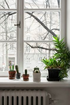 Indoor plants, cactus, and house plants. All the green and growing potted plants. Foliage and botanical design Decor, Home And Garden, My Ideal Home, Windows, Bay Window Decor, Window Decor, Window Sill, Indoor, Indoor Plants