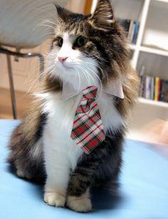 Pet Collar Necktie
