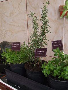 Cucina Artusiana: A ervas do Cucina Artusiana
