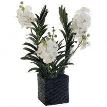 Gelling Orchids available at http://www.seniorfurnishings.com/