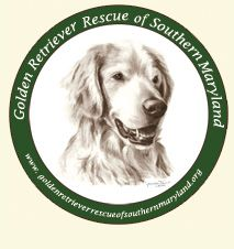 Golden retriever rescue in maryland