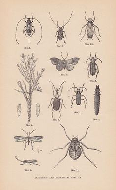 vintage insect illustrations creepy crawly halloween decor from sushi pot vintage, etsy