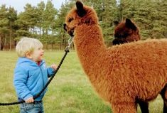 John Muir Alpacas - Alpaca trekking and experiences near Dunbar and Edinburgh, Scotland Picnic Box, Kids Picnic, Picnic Time, Make You Up, Food Hampers, John Muir, Edinburgh Scotland, Alpacas, Creative Activities
