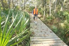 Where: Little Big Econ State Forest Hiking Trail Approximate travel time: 37 minutes Highlights: One of the most rugged hikes in Orlando Cost: Fee for parking at Barr Street trailhead Other notes: For more information, visit Best Scenic Trails; also Florida Hikes and Florida Forest Service