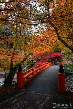 オレンジ色に染まる山の秋 【西明寺】| Japan