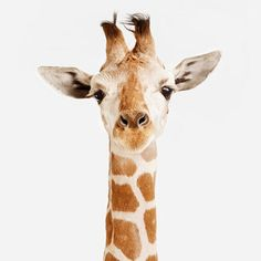 Love these animal prints