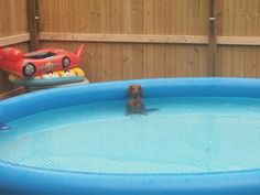 Doxie Enjoys Some 'Me' Time in the Baby Pool