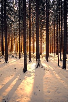 Find images and videos about nature, sun and winter on We Heart It - the app to get lost in what you love. Winter Photography, Landscape Photography, Nature Photography, Foto Picture, Winter Szenen, Foto Top, Winter Beauty, Winter Landscape, Belle Photo