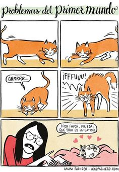 Cats & More