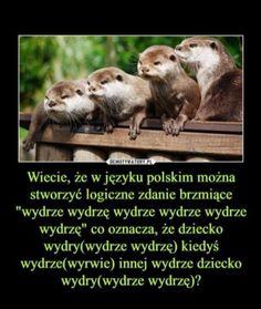 Ferret, Humor, Memes, Funny, Animals, Wattpad, Google, Animales, Animaux