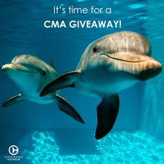 "It's time for another CMA giveaway! Do you have a Pinterest? Create a board on your page titled ""Why I Love Clearwater Marine Aquarium"". The board that displays the most creativity will receive an exclusive CMA prize pack including 3 retail items from your board. The winner will be chosen on February 27th. Full details @ http://www.seewinter.com/pinterest-giveaway"