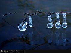 frozen dew drops