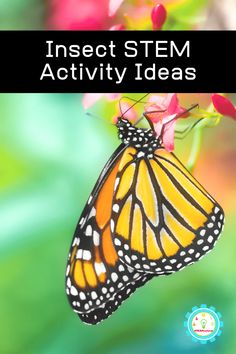 21 Fun Ways to Learn About Insects and Bugs Learning about bugs? These insect STEM activities for kids teach kids the basics about bug anatomy, insect life cycles, and more all using STEM insect activities to boost science learning and education! At Home Science Experiments, Science Activities For Kids, Science Inquiry, Bees For Kids, Insect Activities, Stem Projects, Lessons For Kids, Business For Kids, Bugs