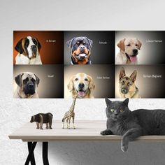 d4bfda8596 DOG PRINTS Wall Art, 6 BREEDS Collection, Large Dogs Sticker, Dog Breeds  Poster, Veterinary Prints, Pet Shop Prints, Dog Wall Decal. Stampe Di Cani  ...