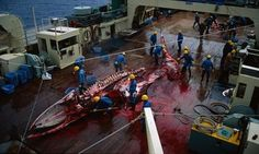 Why is Spar intent on boosting Norway's cruel and dying whaling industry?   Guardian Sustainable Business   The Guardian