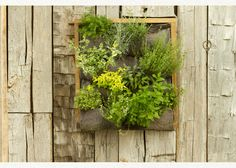 Herb Garden Inspiration & Ideas {Over 50 Pots, Planters, and Containers} - bystephanielynn Vegetable Garden, Garden Plants, Veggie Gardens, Small Herb Gardens, Vertical Gardens, Garden Wall Art, Garden Structures, Plant Wall, Cool Plants
