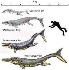 Late Jurassic marine crocodiles, more like Orcas (Killer whales) than crocodiles.