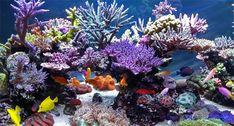 Ultimate budget Reef Lighting you don't want to miss. Saltwater Aquarium Setup, Coral Reef Aquarium, Saltwater Fish Tanks, Marine Aquarium, Aquarium Fish, Coral Reefs, Ocean Underwater, Underwater Creatures, Nano Reef Tank