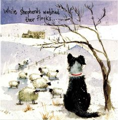 Alex Clark Art Christmas Border Collie Christmas Cards Set of 10 Cards * See this fantastic product. (This is an affiliate link ). Christmas Border, Christmas Cats, Christmas Animals, Animal Paintings, Animal Drawings, Border Collie Art, Sheep Art, Clark Art, Christmas Paintings