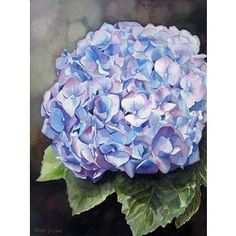 Finished Hydrangea Painting :: Oil Painting, Watercolor Painting, Figurative – Doris Joa – Romantic Realism in oil and watercolor