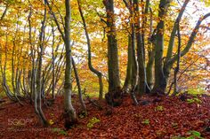 Fall by alessandrotraverso #nature #mothernature #travel #traveling #vacation #visiting #trip #holiday #tourism #tourist #photooftheday #amazing #picoftheday