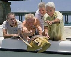 Funny pictures about Turtle escape. Oh, and cool pics about Turtle escape. Also, Turtle escape. Funny Animal Pictures, Funny Photos, Funny Animals, Cute Animals, Funniest Pictures, Meme Pictures, Own Wilson, Animal Captions, Funny Captions