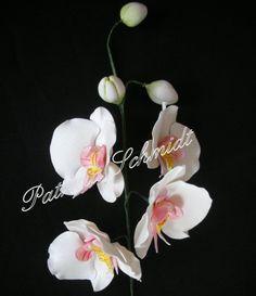 Orquidea Phaleanopsys