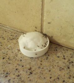 ANT PROBLEM NO MORE! 1  cup sugar 3  Tablespoons of boric acid 3  cups warm water  Mix the boric acid and sugar well. Add the warm water slowly, constantly stirring so it won't be lumpy.  Store in a jar or container with lid.   To use, put a cotton ball into the cap of a medicine or vitamin bottle. With a spoon, fill the cap to saturate the cotton.  Place where you want it; make several if you need them in several places.