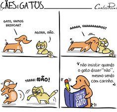 Cães e Gatos – Manual de como lidar com o Gato