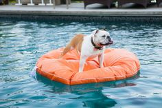 World's First Dogs Only Swimming Pool Opens in Spain