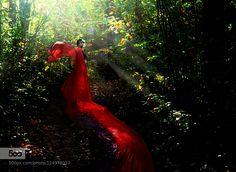 Fae of the Forest - Pinned by Mak Khalaf Fae of the forest has been spotted by an adventurer. http://ift.tt/1HlqvX4 Fine Art angelcompositedarkfaefaeriefairyfairy talefairytalefantasyfeyforestgirllong dressmanipulationsredred dressstory bookstorybooksunbeamswingswomanwoods by elizabethruse