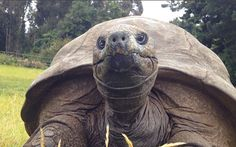 Video: Meet the 183-year-old tortoise who is the world's oldest living land creature - Telegraph