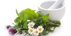 Zuviel gegessen? Plagen Sie  Übelkeit und Bauchschmerzen? Die folgenden 7  Kräuter bzw. Hausmittel helfen beim Verdauen und sorgen für Linderung bei Völlegefühl, Sodbrennen, Übelkeit und Blähungen.