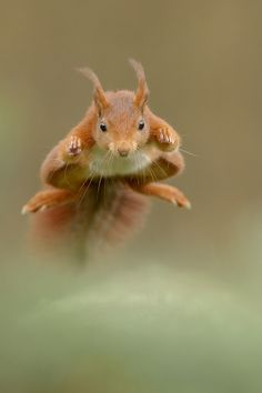 Flying squirrel animals nature wildlife photography birds