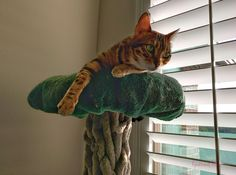 Whiskers & Paws May 2016 Edition (8)