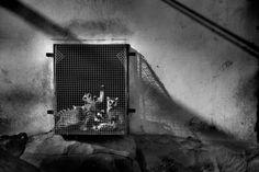 Преступления в дикой природе « FotoRelax