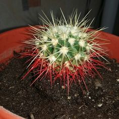 Этот кактус очень калючий!