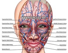Skin Cutaway for Botox injection instruction