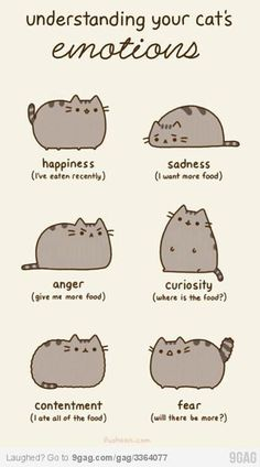 FAT CAT.