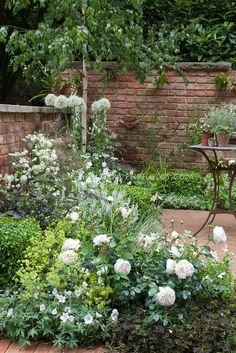 White color theme garden with brick patio and wall, patio furniture. Plants include white English roses Rosa, white geranium, Campanula, Allium, Digitalis foxglove, Astrantia major, with fennel herb, green lady's mantle Alchemilla, dark Trifolium clover, Buxus boxwood shrubs for serene green and white. Classic flower gardening in the backyard