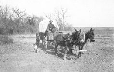 Ed Irwin in a covered wagon led by two mules. Western History Collections, University of Oklahoma Libraries, Irwin Brothers Studio Collection, Early Scenes