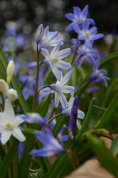 Friary Mews Gardens in blue Newark On Trent, Gardens, Plants, Blue, Outdoor Gardens, Plant, Garden, House Gardens, Planets