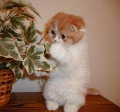 ご飯を食べる猫 - Google 検索