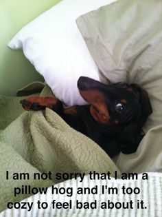 I guess it is a doxie thing....Daiquiri and Oscar take up most of my queen size bed and pillows! lol ___ Trullly LOVE your dogs? VISIT our website now!