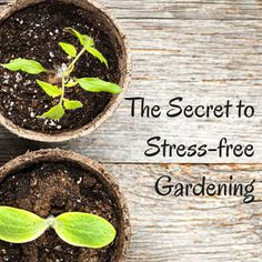 The Secret to Stress-Free Gardening: BrownThumbMama.com