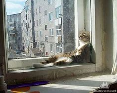 """Ohhh, this feels so good...I'll just be right here soaking up the sun """")"""