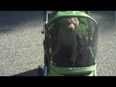 Top 10 Reasons Why People Love the Dogger Dog Stroller